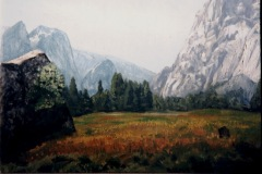 Yosemite-Meadow